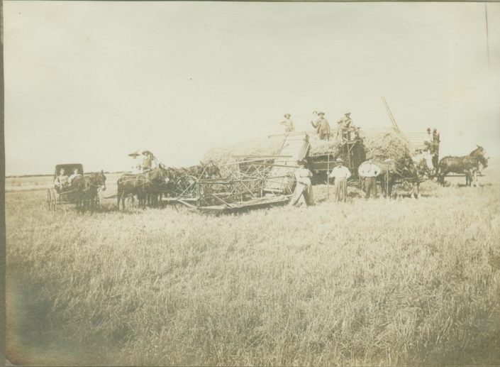 Harvest scene, early 1900's. No names.
